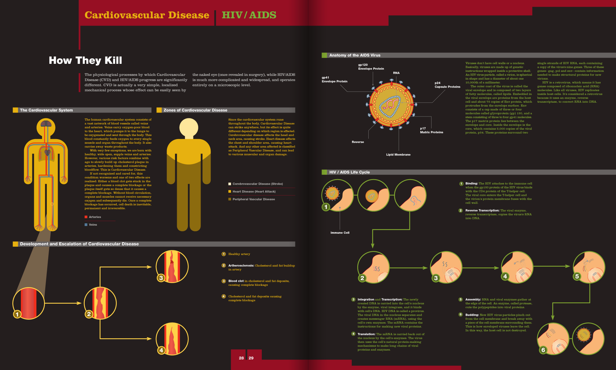magazine article segment comparing how Cardiovascular Disease and HIV/AIDS affect the body
